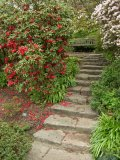 April Photograph of Stone Steps Branklyn Garden Scotland